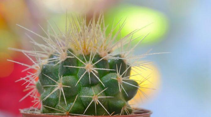 Пазете децата от дифенбахията и кактусите