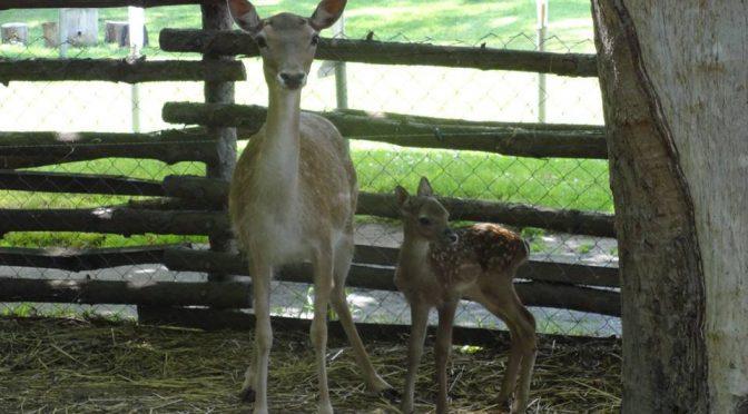 Във варненския зоопарк можете да гушкате зайчета и кошута