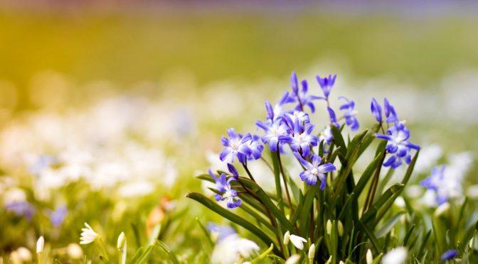 Пролет пак ни е дошла