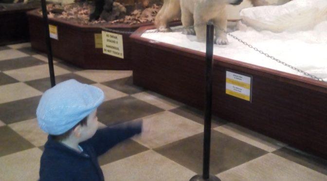 Подарете си един ден в музея с животните
