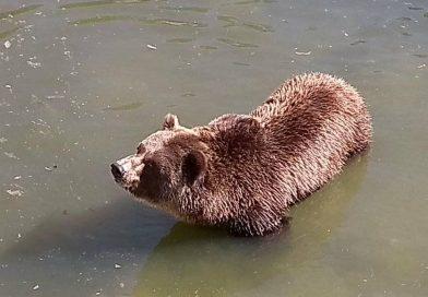 Разгледайте софийския зоопарк онлайн